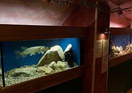 Interiér akvárií