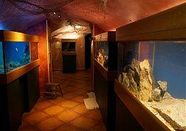 Akvária sladkovodních ryb